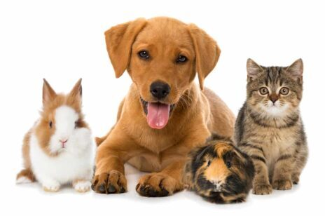 Animali domestici - Pet - Cremazione per Animali