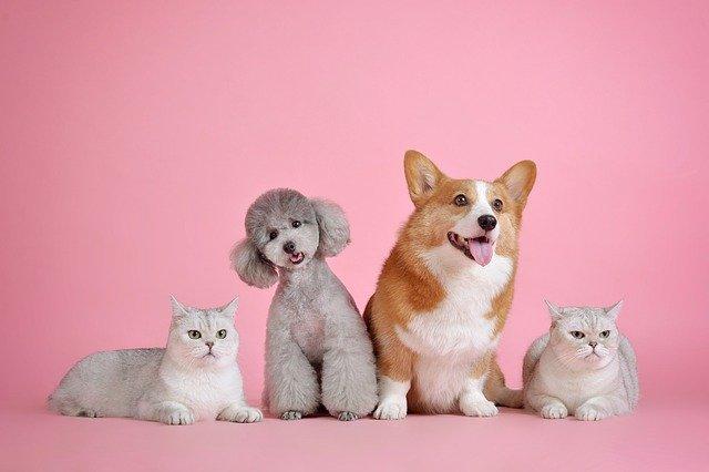 Pets - Animali d' affezione . Cani e gatti - Cremazione